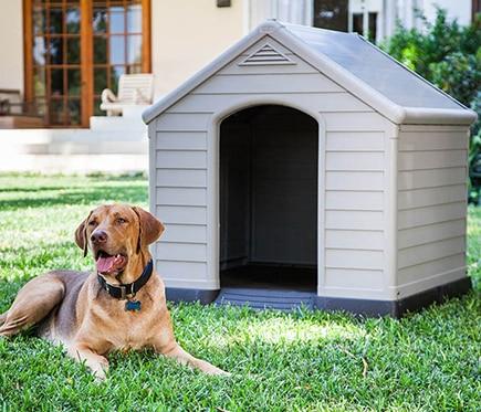 C mo mantener una caseta para perros comunidad leroy - Caseta perro resina ...