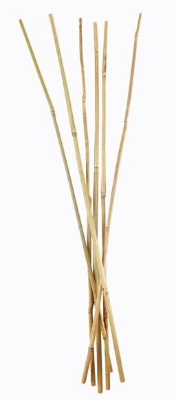 Tutor bamb natural ref 12328414 leroy merlin - Canas de bambu decorativas leroy merlin ...