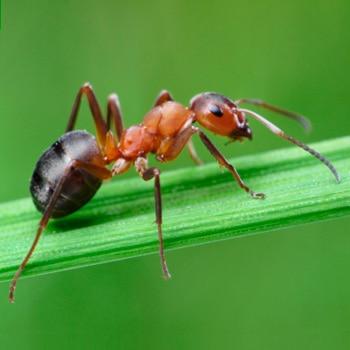 Insecticidas leroy merlin for Como acabar con las hormigas del jardin