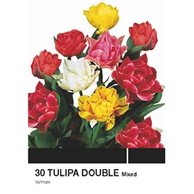 Bulbos de tulipán Geolia Double mixed