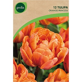 Bulbos de tulipán Geolia Orange princess