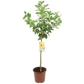 Plantas leroy merlin for Plantas de interior leroy merlin