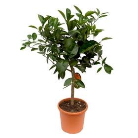 Plantas leroy merlin for Plantas decorativas en leroy merlin