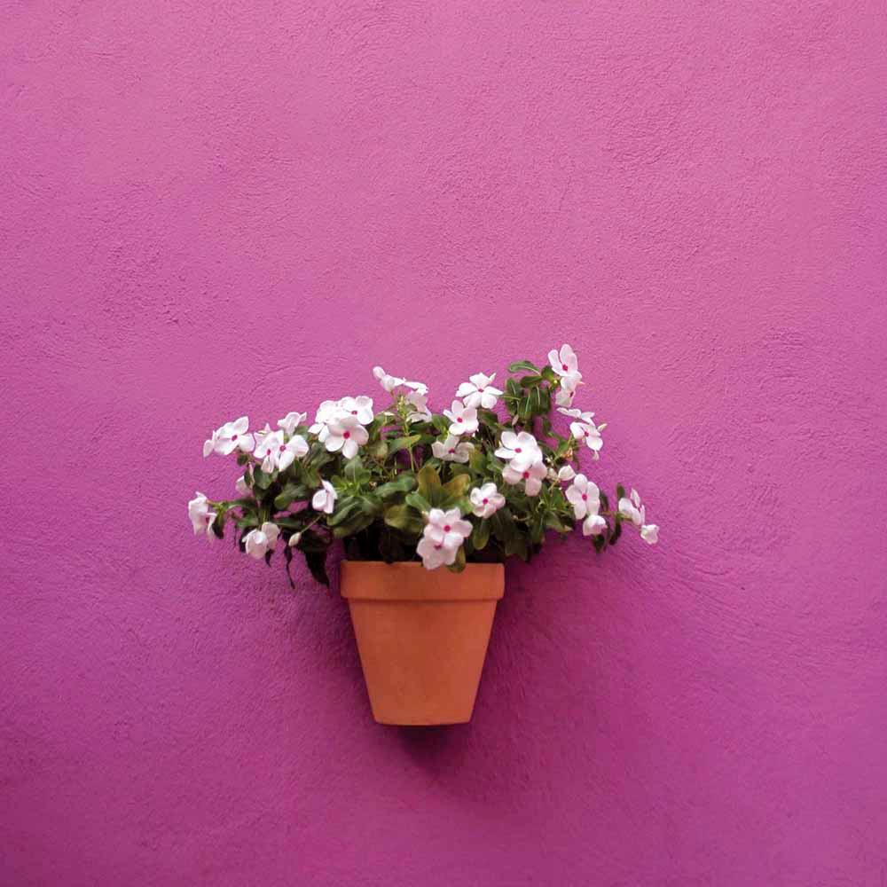 Maceta de barro pared ref 12732006 leroy merlin for Plantas decorativas en leroy merlin