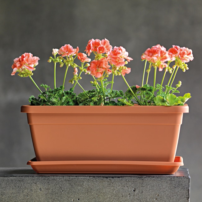 Jardinera de resina terracota rectangular ref 17519411 leroy merlin - Jardineras de terracota ...