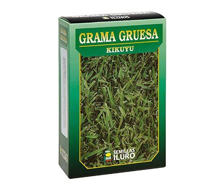 Semilla de c sped grama gruesa kikuyu ref 12775840 for Semillas leroy merlin