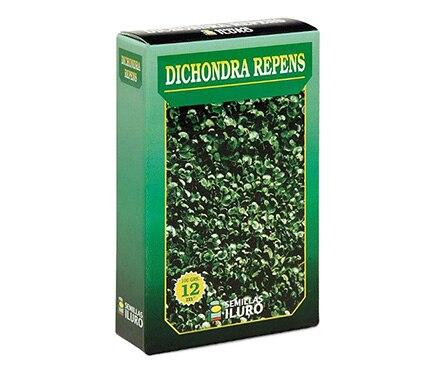 Semilla de c sped c sped dichondra repens ref 11543700 for Semillas leroy merlin