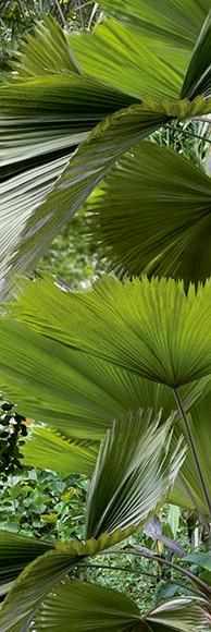 Vinilo Para Frigor Fico Tropical Ref 15654114 Leroy Merlin