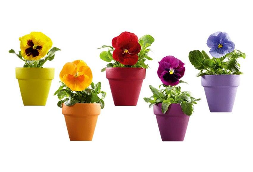 Vinilo floral macetas colores ref 16855454 leroy merlin - Macetas de colores ...